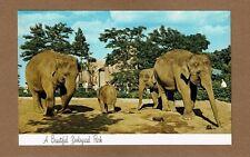 Milwaukee,WI Wisconsin County Zoo, Indian Elephants enjoying snacks