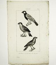 Le BOUVET, Le BOUVREUIL, Le BEC ROND Gravure Oiseaux Original circa 1800