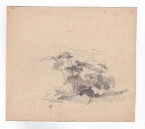 Xanthus Smith Pencil Plant Study 1857