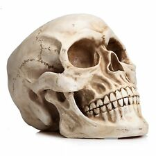 Realistic Full Size Human Skull Anatomical Skeleton Head Bone Replica Decor 1:1
