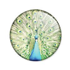 Badge PAON Peacock oiseau turquoise cute funny kawaii chic pop pin button Ø25mm