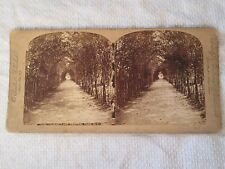 c1880s LOVERS' LANE Central Park NEW YORK USA - Stereoview Photo Card