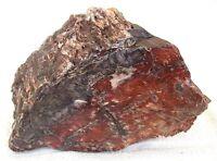 15 Pound 12 Ounce Arizona Petrified Rainbow Agate Fossil Wood Trunk EBS2246