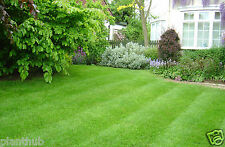 TURF GRASS SEEDS - Cynodon dactylon - Live Green Soft Carpet -Pack of 1000 Seeds