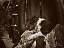 DOG ART PRINT - Daydreamer by Barry Hart Cowboy Western Puppy Ranch Poster 11x14