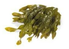 Seaweed bath-spa organic seaweed/ kelp bath 100% Natural - (500g dry)