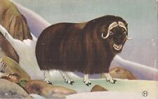 Northwest & Alaskan Musk Ox - 1932 - ANIMAL