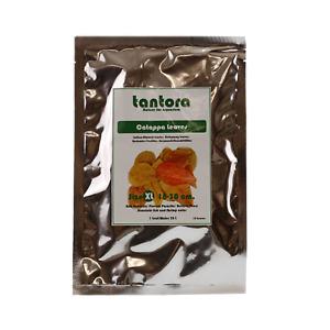 10 TANTORA XL CATAPPA LEAVES Indian Almond Bulk Crystal Red Cherry Shrimp