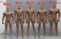 TBLeague 1/6 Male PH Body Muscular Action Figure Seamless M30-M34 Soldier Toy