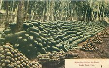 ROCKY FORD CO MELON DAY BEFORE THE FEAST POSTCARD c1910s FAMILY NAMED KITCHEN