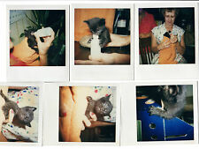 Lot of 7 1950s-60s vintage color polaroid images baby cat cats being bottle fed