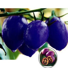 1 Pack 40 Seeds Purple Cherry Tomato Potted Heirloom Non-Gmo Organic Plant Seeds