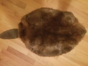 Beaver tanned taxidermy fur with tail
