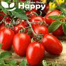 VEGETABLE - TOMATO ROMA TYPE - Chrobry F1 - 50 SEEDS - determinate tomato