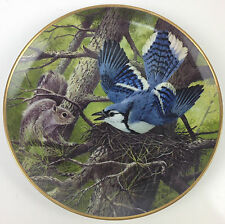 Aj Rudisill National Audubon Society Squirrel & Blue Jay Protecting Nest Plate