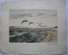 Karl Ewald Olszewski (1884-1965) Grigio oche sopra la spiaggia acquaforte orig 1970
