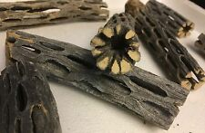 2 Stücke Cholla Cactus Wood (ca. �˜ 2cm, 8 und 15cm lang) Vuka Holz für Garnelen