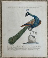 Saverio Monetti Peacock Italian 18th C. Antique Original Etching