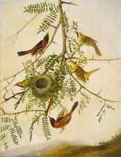 Orchard Oriole by John James Audubon 9x12 inch on mono deluxe Needlepoint Canvas