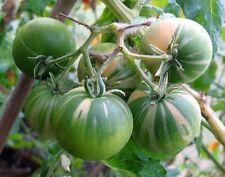 Variegate POMODORO Solanum lycopersicum Orbea 10 Semi Freschi