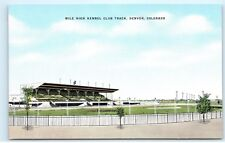 *Mile High Kennel Club Track Dog Races Denver Colorado Vintage Postcard B46