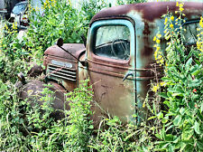 1940s GMC Pickup in Salvage yard being consumed by nature  8 x 10 photograph