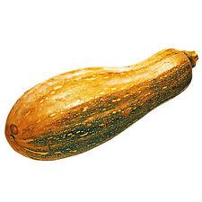 Pumpkin Seeds 8 Cucurbita Moschata Sweet Pumpkin Vegetable Garden Seeds Hot C044