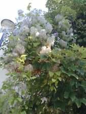 Graines de fleurs,fleurs à plumes,produits de mon jardin, plante Bio,Cueilli et