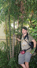 winterharter Riesenbambus Bambus für draußen den Garten Fargesia communis Samen