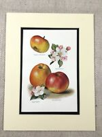 1892 Antique Print Fruit Pippin Apples Horticulture Botanical Chromolithograph