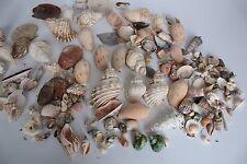 Sea Shells Bulk Lot Vintage