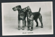 Welsh Terriers from series Dogs by Senior Service Cigarettes card #47