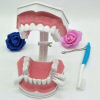 Démonstration d'hygiène de brosse à dents modèle dentaire de dents géantes