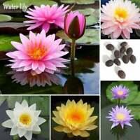 Fertilizer  Multicolor Value Lotus Small Dwarf Water Lily Plants Thai 10 Seeds