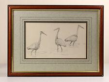 John Cyril HARRISON   fine ORIGINAL pencil sketch   GOLIATH heron studies   bird