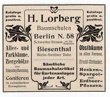 H.Lorberg Baumschulen Berlin   Werbung   rok 1902