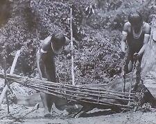 1915, Waiwai Men Killing Wild Peccary in Native Trap, Magic Lantern Glass Slide
