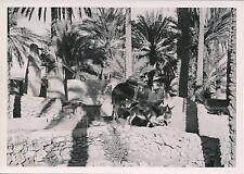 BERRIANE  c. 1935 -Âne et Chameau tirant les Outres Hors du Puit Algérie - P 592