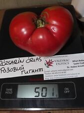 Rozovij Gigant - Rose-coloured Giant - 5+ seeds - MEATY and SWEET!