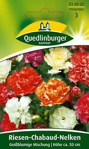 Quedlinburger Saatgut - Chabaudnelken Samen - Großblumige Mischung