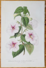 Lemaire Illustration Horticole Gesneria Achimenes - 1855#