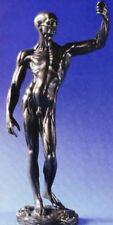 ANATOMISCHE STUDIE - NACH JEAN-ANTOINE HOUDON 25 CM