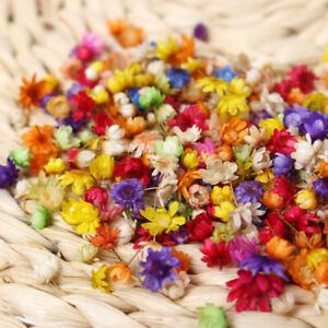 200-2000PCS Real Dried Flowers For Art Craft Epoxy Resin Candle Making Jewellery