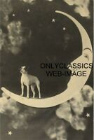 1913 JACK RUSSELL TERRIER DOG PAPER MOON 4x6 PHOTO PHOTOGRAPHY STUDIO AMERICANA