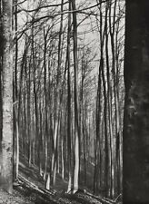 1928 Vintage Germany FOREST TREE Landscape Objectivity Art ALBERT RENGER-PATZSCH
