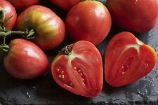 Tomato Red Oxheart enorme le colture di grandi Gustoso Frutta a forma di cuore 10 Semi Freschi