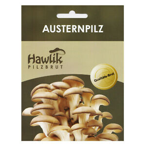 Austernpilze Dübe, Pilze selber züchten, Pilzzucht, Pilzbrut.de, Hawlik
