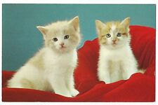 SOFT FLUFFY KITTENS White Orange on RED Blanket Blue Eyes Cats Vintage Postcard