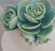 Succulents  Sugar flower  Gumpaste wedding birthday cake decoration topper