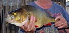 Rapala All Species Saltwater Fishing Baits, Lures & Flies